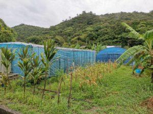 田嘉里のOKINAWACACAOの畑